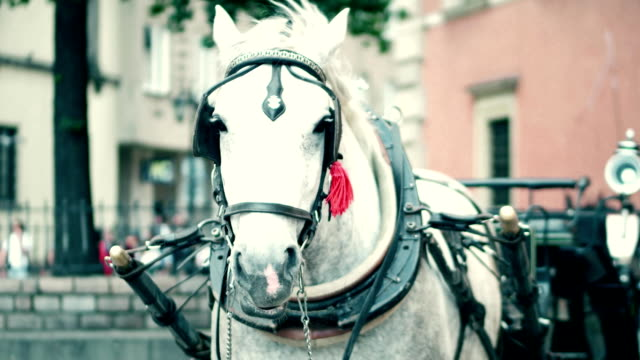 Harnessed dapple gray horse on the street Harnessed horse on the street animal markings stock videos & royalty-free footage