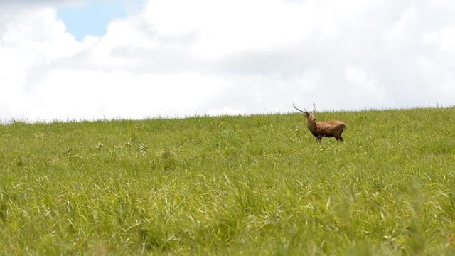 hart still here - single pampas grass bildbanksvideor och videomaterial från bakom kulisserna