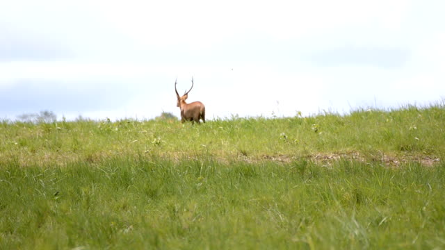 hart walk away - single pampas grass bildbanksvideor och videomaterial från bakom kulisserna