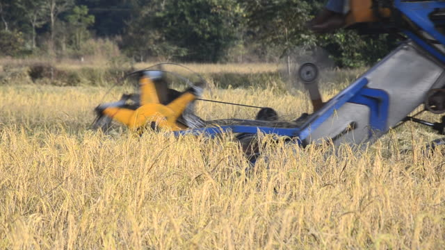vidéos et rushes de harvest de travail au paddy field - équipement agricole