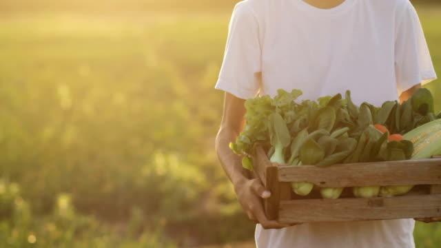 vídeos de stock e filmes b-roll de harvest fresh vegetable and delivery to market - picking fruit