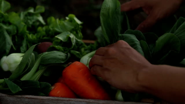 raccogliere verdure fresche e imballare in scatola di legno - mestiere nella ristorazione video stock e b–roll