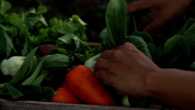 vídeos de stock e filmes b-roll de harvest fresh vegetable and packing to wooden box - engradado