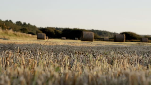 vidéos et rushes de harvest hay bails dans tout domaine. - foin