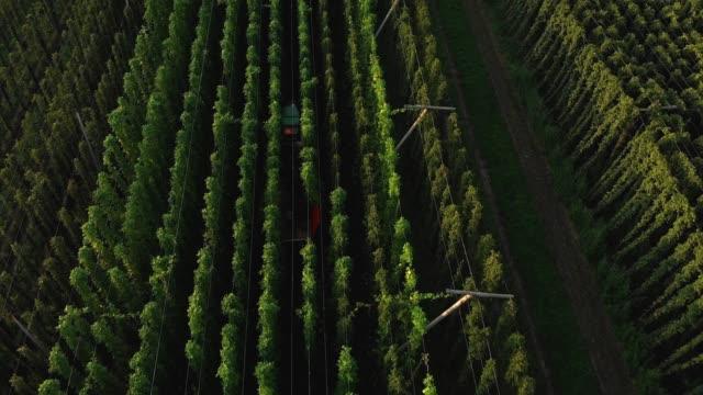 harvest season for hops - energia sostenibile video stock e b–roll