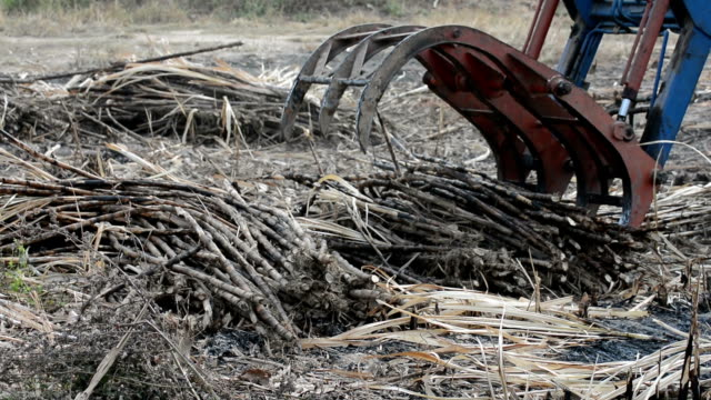 Harvest Sugarcane