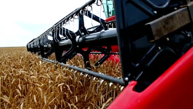 Harvest wheat video