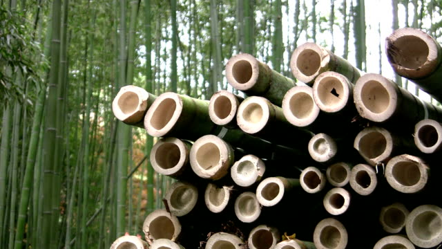 Harvested Bamboo Logs video