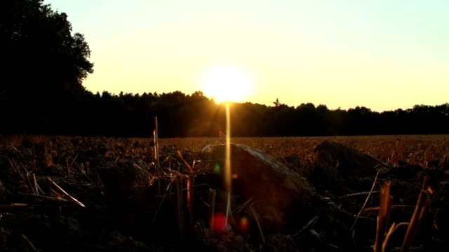 Harvested Corn Field At Sunset video