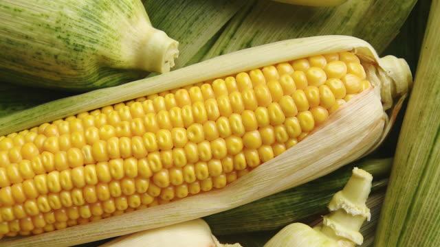 HD: Harvested Corns On The Cob video