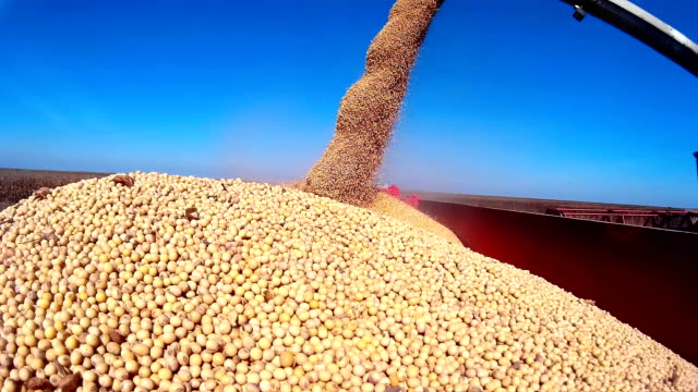 Harvested soybean video