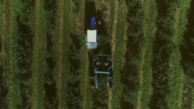 vídeos de stock e filmes b-roll de harvester collects berries. fruit garden. aerial view. - diospiro