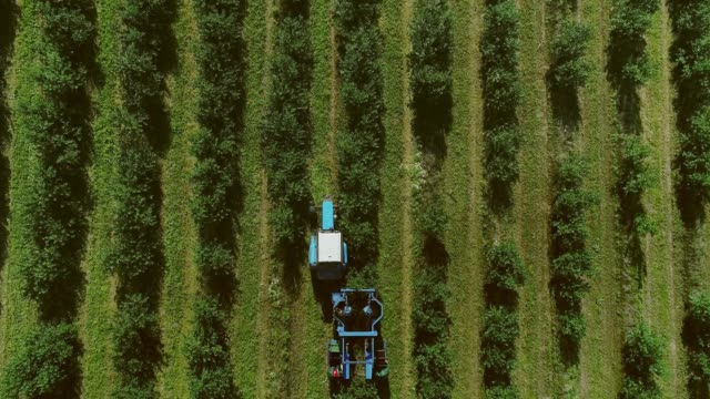 harvester collects berries. fruit garden. aerial view. - albicocca video stock e b–roll