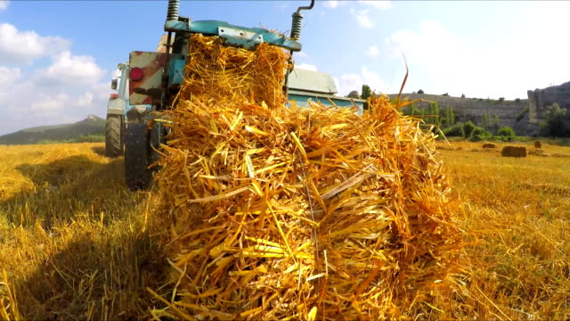 Harvester forms hay in bales and leaves them on the field The combine travels through the field, forms hay in bales and drops them onto the field, the camera moves behind the object monoculture stock videos & royalty-free footage