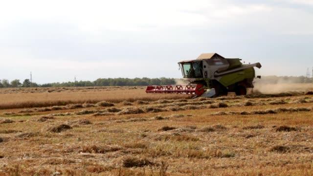 vidéos et rushes de machine de moissonneuse pour récolter le travail de champ de blé. combinez la machine d'agriculture de moissonneuse récoltant le champ mûr de blé mûr d'or. agriculture - équipement agricole