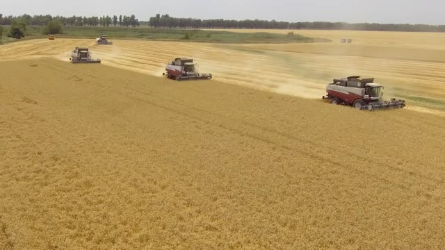 Harvester taking a crop in the field.