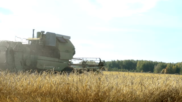 Harvester working in the field video