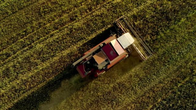 harvester arbeiten auf einem acker, ansicht von oben - weißrussland stock-videos und b-roll-filmmaterial