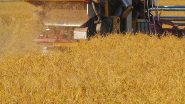 収穫米の分野 - 稲点の映像素材/bロール