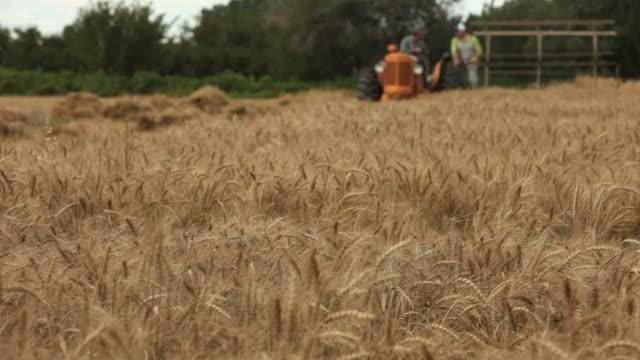 Harvesting a field of wheat HD 1080
