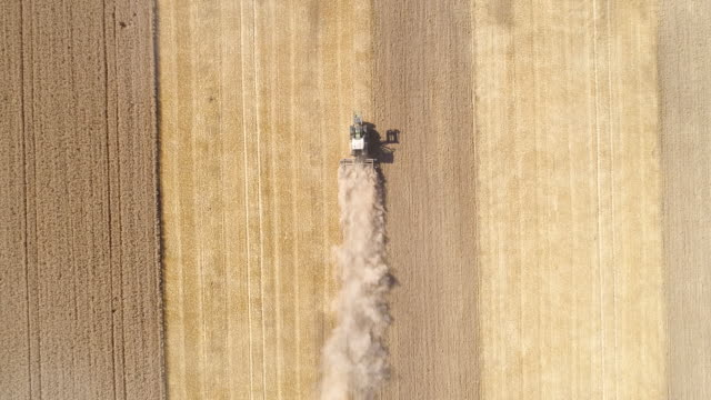 Video Harvesting a wheat field during a very dry summer season - aerial view