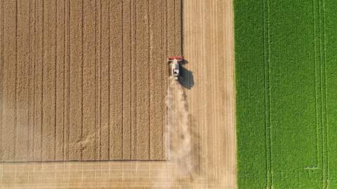 raccolta di un campo di grano durante una stagione estiva molto secca - vista aerea - composizione orizzontale video stock e b–roll