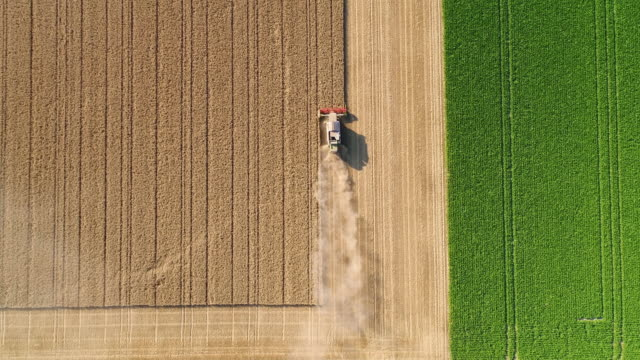 harvesting a wheat field during a very dry summer season - aerial view - landscape video stock e b–roll