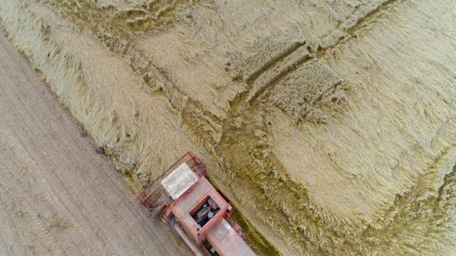 skörd. kombinera skördare skörd vete - e handel bildbanksvideor och videomaterial från bakom kulisserna