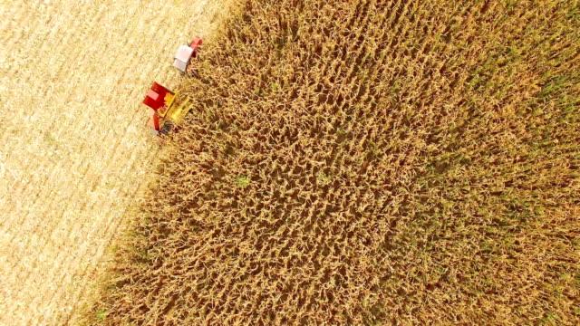 AERIAL SHOT Harvesting Corn