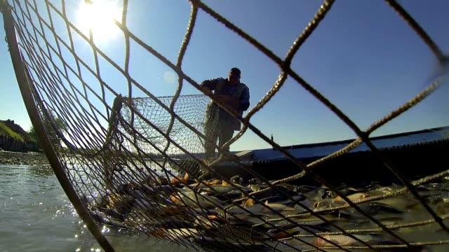 Harvesting Fish at Fish Farm video
