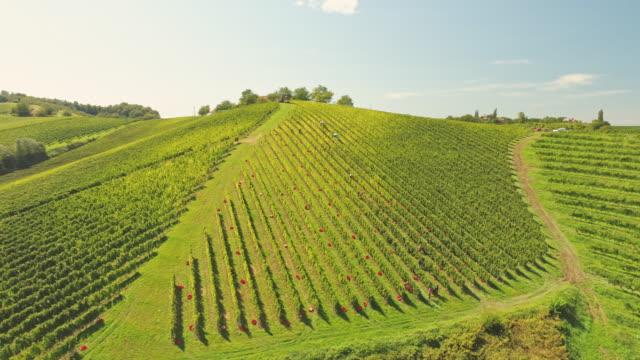 vídeos de stock e filmes b-roll de aerial harvesting grapes in vineyard - picking fruit