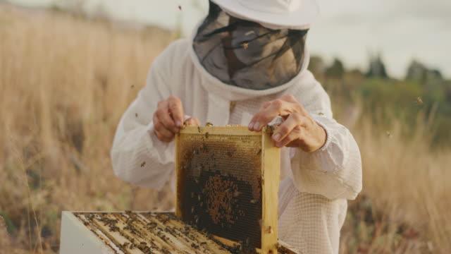 vídeos de stock e filmes b-roll de harvesting honey at sunset - colher atividade agrícola