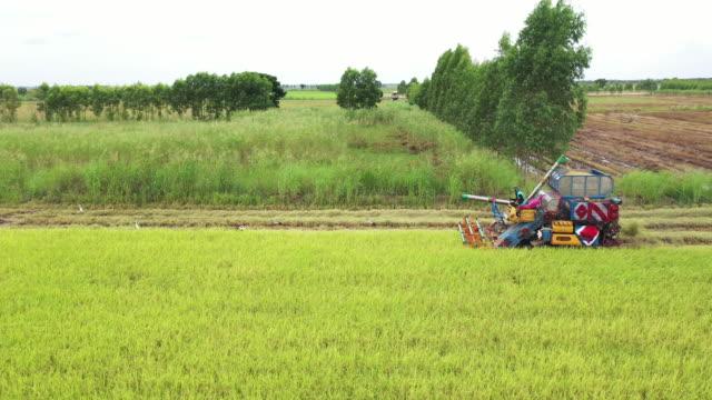 Harvesting machine cutting down rice