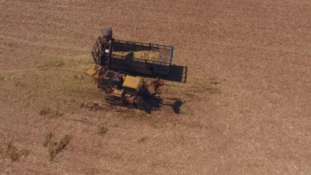 Harvesting machine cutting down ripe sugarcane for plantation period