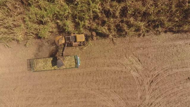 Harvesting machine cutting down ripe sugarcane for plantation period, Aerial View
