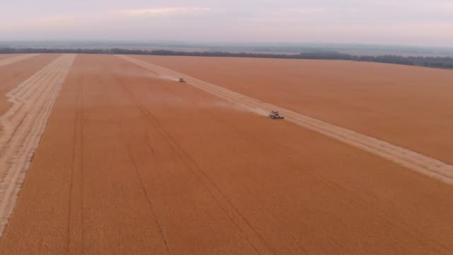 Harvesting of soybean field with combine Harvesting of soybean field with combine. monoculture stock videos & royalty-free footage