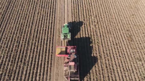 Harvesting potatoes in field aerial potatoes harvesting machine with tractor in farm land for harvesting potatoes. Farm machinery harvesting potatoes. harvesting stock videos & royalty-free footage