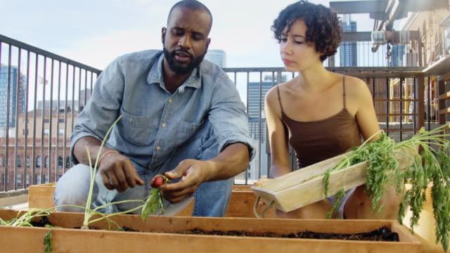 ernten von wurzelgemüse aus balkon garten - dachgarten videos stock-videos und b-roll-filmmaterial