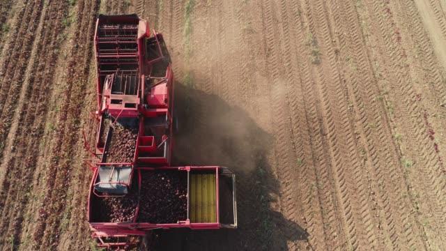 vidéos et rushes de récolte de betteraves à sucre - équipement agricole