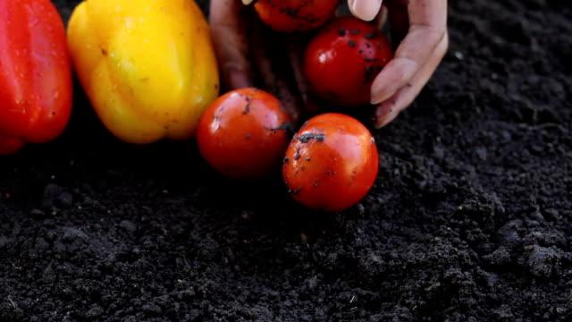 Ernten Tomaten – Video