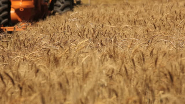 Harvesting wheat HD 1080