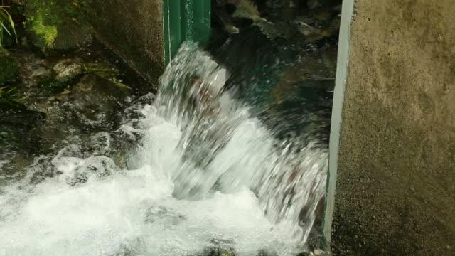 Hatchery Salmon Returning to Spawn video