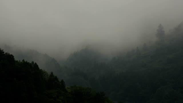profumi in movimento attraverso un suggestivo conifere arti foresta dopo una rainstorm. moderata intervallo di tempo. - yeti video stock e b–roll