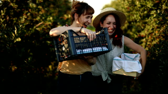 Having fun at harvest time in orchard Two ladies in good mood walking on agriculture field with crates in hands, smiling together while picking up cherries cherry stock videos & royalty-free footage