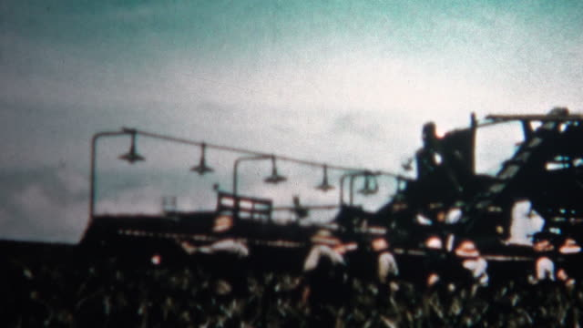 (8mm Vintage) 1955 Hawaiian Pineapple Harvest Cannery video