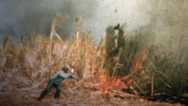 (8mm Vintage) 1955 Hawaiian Sugar Cane Burning video