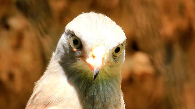 Hawk video
