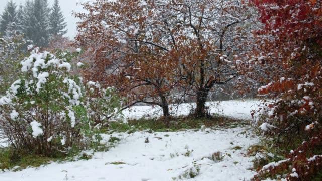 weißdorn baum mit roten blättern unter starkem schneefall im spätherbst und frühwinter in sibirien - laub winter stock-videos und b-roll-filmmaterial