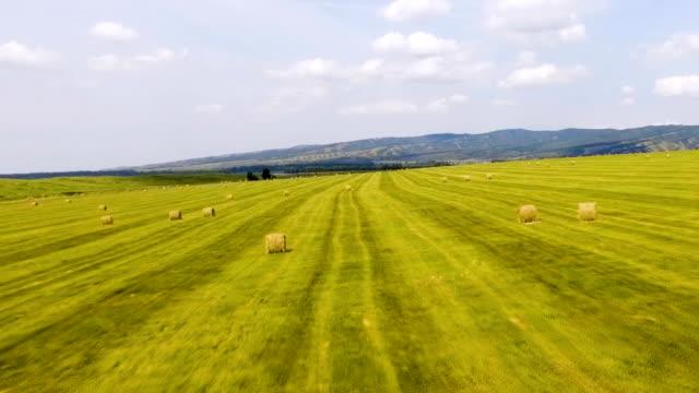 vídeos de stock, filmes e b-roll de fardos de feno nos campos verdes nas colinas de fundo. vista aérea - rústico