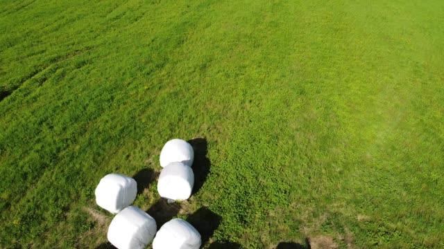 ショルンフィールドビデオで白い袋に詰め込まれた干し草 ビデオ